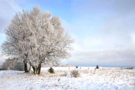 Winter Bäume, Landschaft in der Nähe von kleinen, malerischen Pasterka-Dorf in Polen. Berühmte Attraktion, Tafelberg.