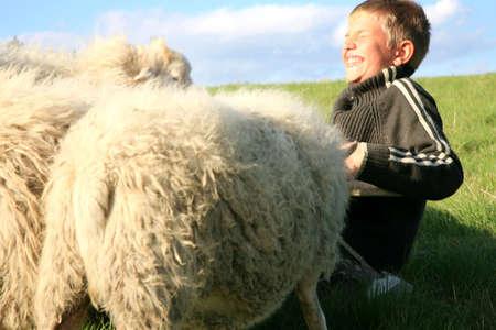Der junge füttert Schafe auf der Wiese. Skudde - die primitivsten Schaf-Rasse in Europa  Standard-Bild