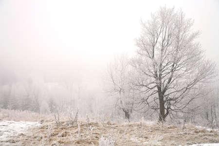 Trees in misty haze in a gloomy winter day. Pasterka village in Poland. Stock Photo - 8938706