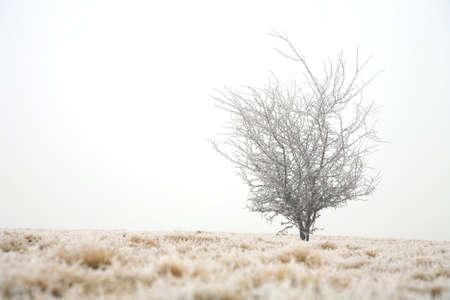 Trees in misty haze in a gloomy winter day. Pasterka village in Poland. photo