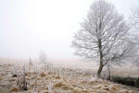 Trees in misty haze in a gloomy winter day. Pasterka village in Poland. Stock Photo - 8938713