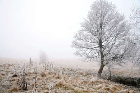 Trees in misty haze in a gloomy winter day. Pasterka village in Poland. Stock Photo - 8938713