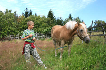 Boy and horse haflinger on the pasture