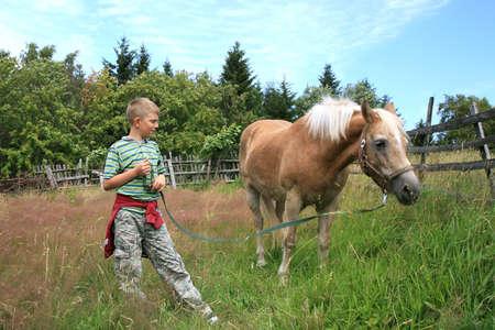 Chlapec a kůň haflinger na pastvu