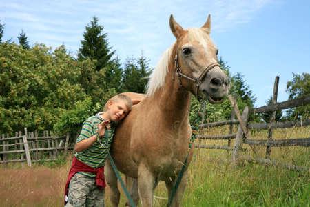 Chico y haflinger caballo en el pasto Foto de archivo