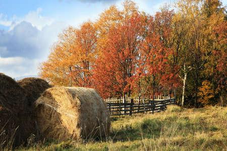 Teplý a pestrý podzim v přírodě. Sklízené seno.