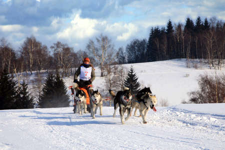 PASTERKA , POLAND – February 04-05: First International Polish Championship Sled Dog PZSPZ Under Szczeliniec Sprint & Mid on February 04-05, 2012 in Pasterka and Karłów, Poland.