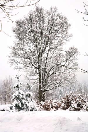 Winter forest, snowy landscape in mountain. photo