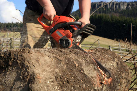 Sawdust flies as a man cuts a fallen tree into logs