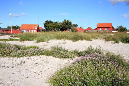 Typische roten skandinavischen Haus auf Küste in Snogebaek, am frühen Morgen und violetten Blumen auf den Dünen - Bornholm, Dänemark
