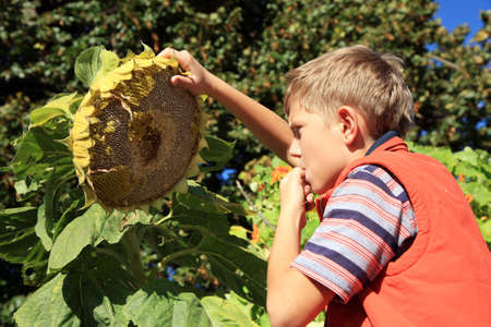 Blond teenage boy eating sunflower seeds  Autumn in the garden  Seasonal plants  photo