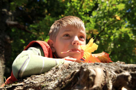 Boy with colored leaves under tree warm, gold autumn  Fall colors  photo