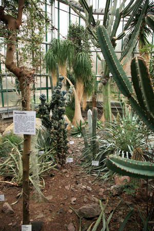 Cactus, Orangery with tropical plants in Czech Republic, Liberec  photo