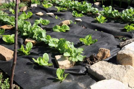 Der Aufbau einer kleinen, Hinterhof Gemüse-und Kräutergarten Formaler Garten auf der alten Klostergärten Pasterka Dorf in Polen modelliert, Stolowe Tabelle Moutains Standard-Bild