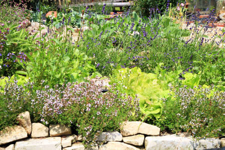 Spring in formal eco home garden  Organic cultivation of herbs and vegetables  photo