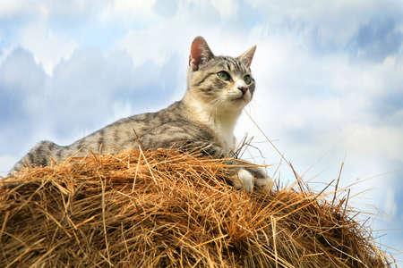 Striped, grey little cat sitting on hay