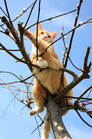 Ginger cat sitting on a willow  Spring  photo