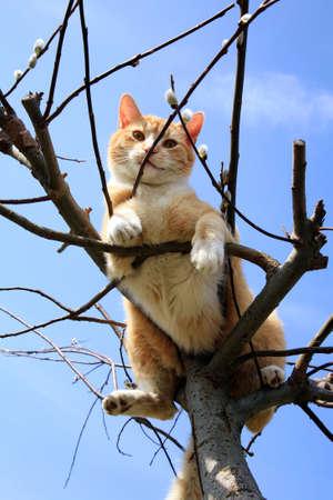 Ingwer Katze sitzt auf einer Weide Frühling