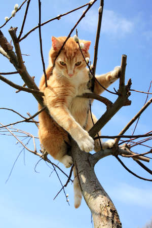 Ginger cat sitting on a willow  Spring