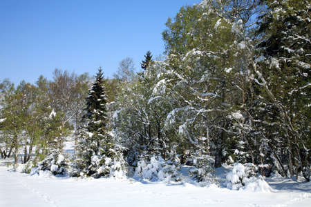 Weather anomalies  Snow in May  Winter in spring Stock Photo - 27625702