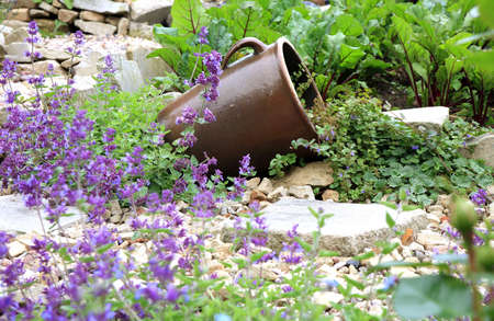 catnip: Eco-Friendly, herbal formal garden backyard. Lying stoneware with Glechoma hederacea and catnip on the gravel path.