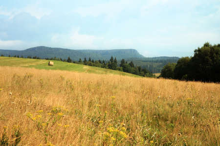 haymaking: Hay harvest on meadow in Pasterka village, Poland, Table Mountains travel destination.