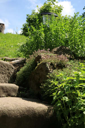 Garden composition with old sandstone stairs and aromatic herbs. Eco country garden. Stock Photo