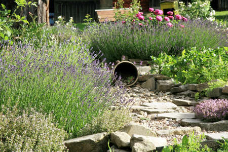 Country home garden by rustic style. Spring herbs and vegetable. Standard-Bild