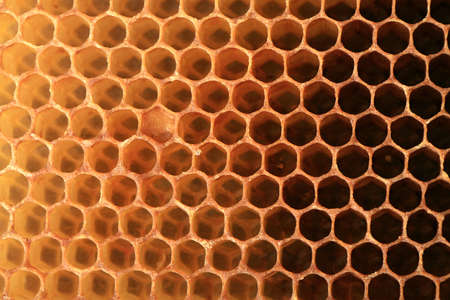 View on shape cell an honeycomb. A bee patch made by bees from wax. It is used for storing honey, perga and for breeding larvae. Stock Photo