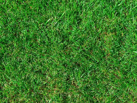 The green is juicy a grass on pratum Stock Photo - 5352973