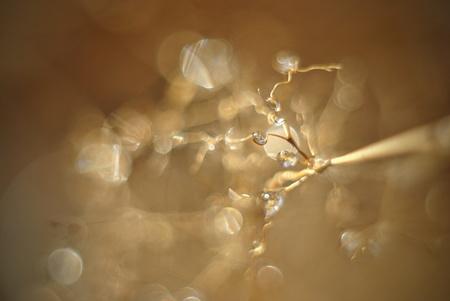 defocussed: Defocussed water drops brown abstraction Stock Photo