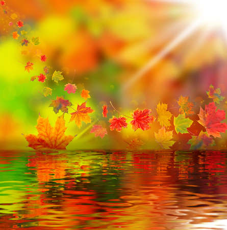Colorful autumn leaves, autumn background photo