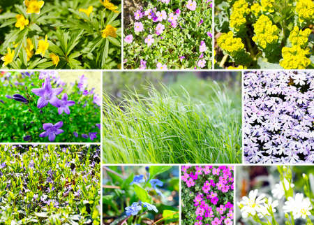 ground cover: Ground cover assortment Stock Photo