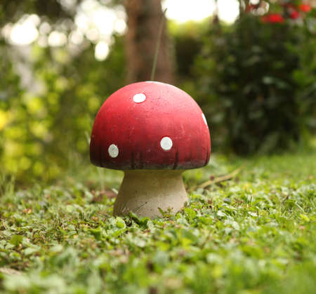 Toadstool photo