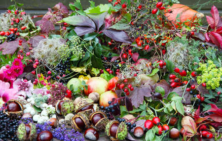 floristry: Collected autumn treasures, floristry Stock Photo
