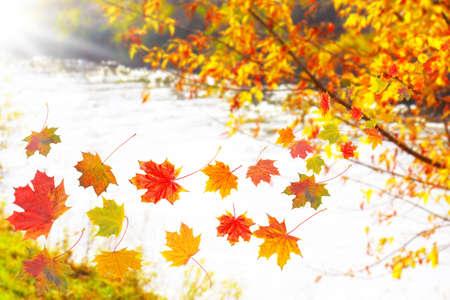 autumn motif: Colorful autumn leaves, autumn background