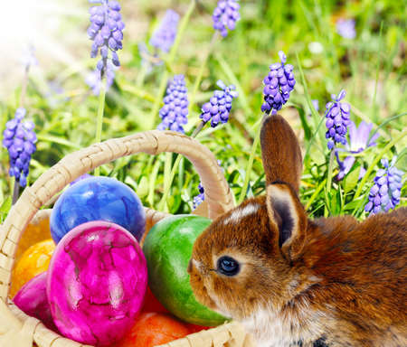 hides: Easter Bunny hides eggs Stock Photo