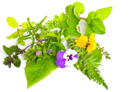 globules: Medicinal herbs and globules on white