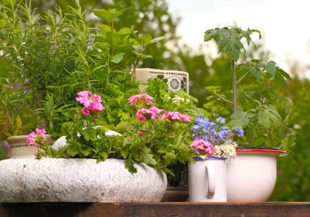 Plant table, Summery garden table Stockfoto