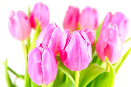 pink tulips: Pink tulips, tulips bouquet
