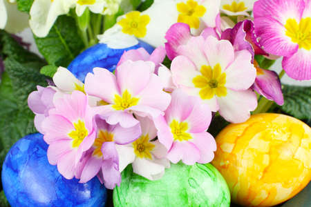 Eggs between Primroses photo