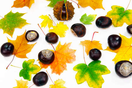 autumn motif: Autumnal decoration scattered
