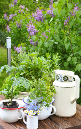 Old dishes as garden decoration