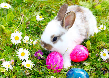 bunny ears: Easter bunny and easter eggs Stock Photo
