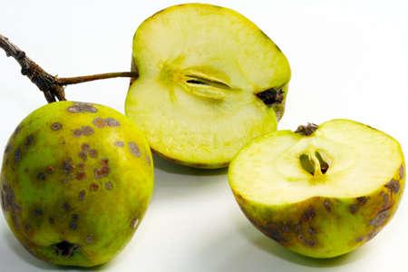 diseased: Apple scab, fruit disease