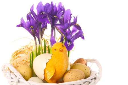 Easter basket with chicks and crocuses Imagens