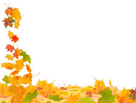 autumn motif: Autumn Leaves
