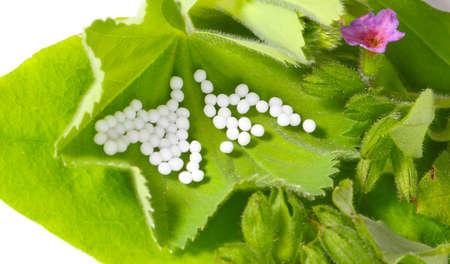globules: Globules on medicinal herbs