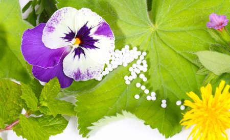 globules: Globules and medicinal herbs