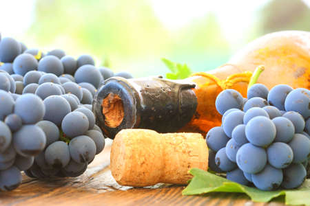 Old wine and young grape Stock Photo - 22930252
